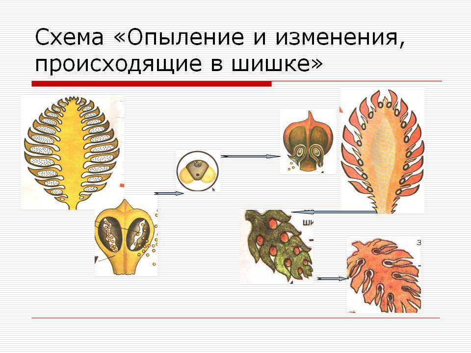 hello_html_40e174ff.jpg