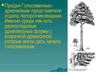 Предки Голосеменных- древнейшие представители отдела папоротниковидных. Имен
