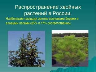 Распространение хвойных растений в России. Наибольшие площади заняты сосновы