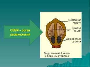 СЕМЯ – орган размножения