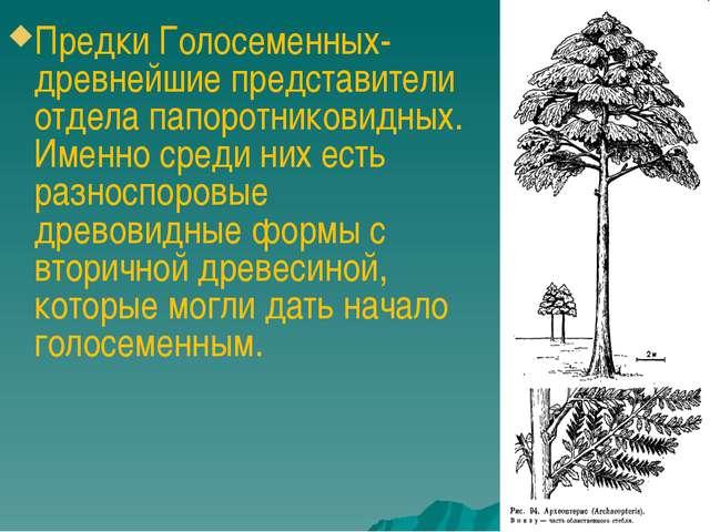 Предки Голосеменных- древнейшие представители отдела папоротниковидных. Имен...