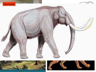 Мамонт, шерстистый носорог, северный олень, бизон, сайгак, лошадь. При освое