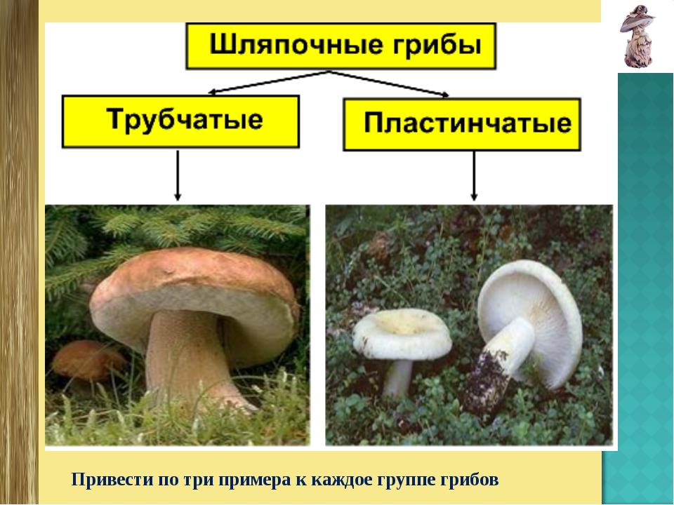 Шляпочные грибы презентации