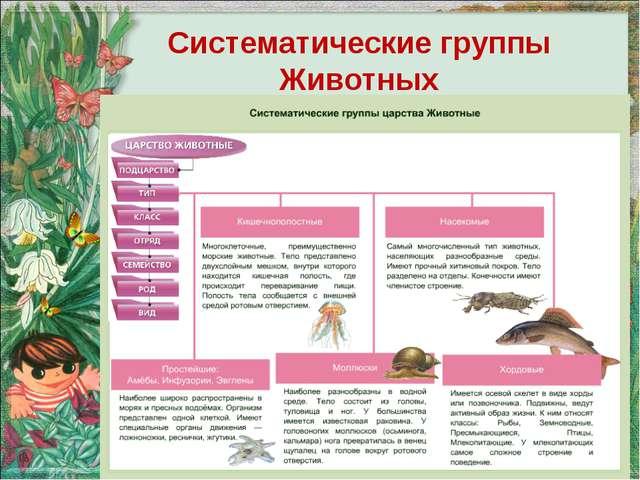 Систематические группы Животных