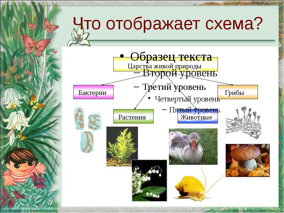 Царства живой природы Бактерии