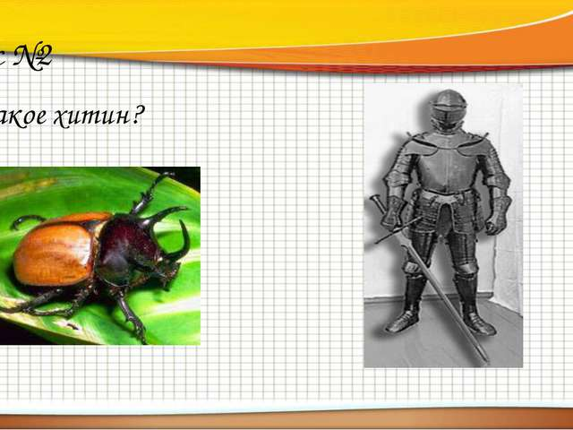 Вопрос №2 Что такое хитин?