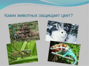 Каких животных защищает цвет?
