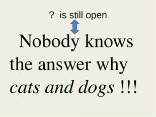 ? is still open Nobody knows the answer why cats and dogs !!!