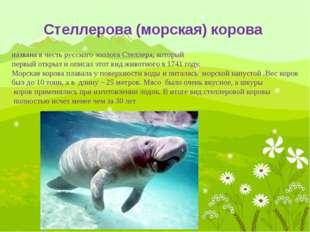 Китайский речной дельфин относится к отряду млекопитающих, представитель речн