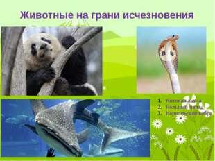 Животные на грани исчезновения 4. Зебра греви 5. Гепард 6. Амурский тигр 7. К