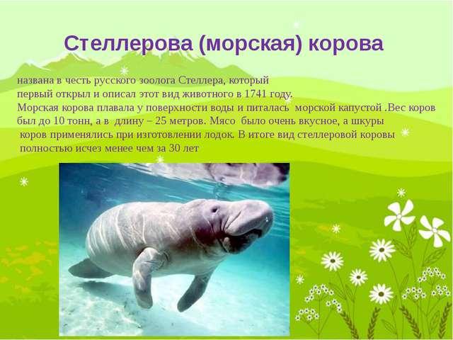 Китайский речной дельфин относится к отряду млекопитающих, представитель речн...