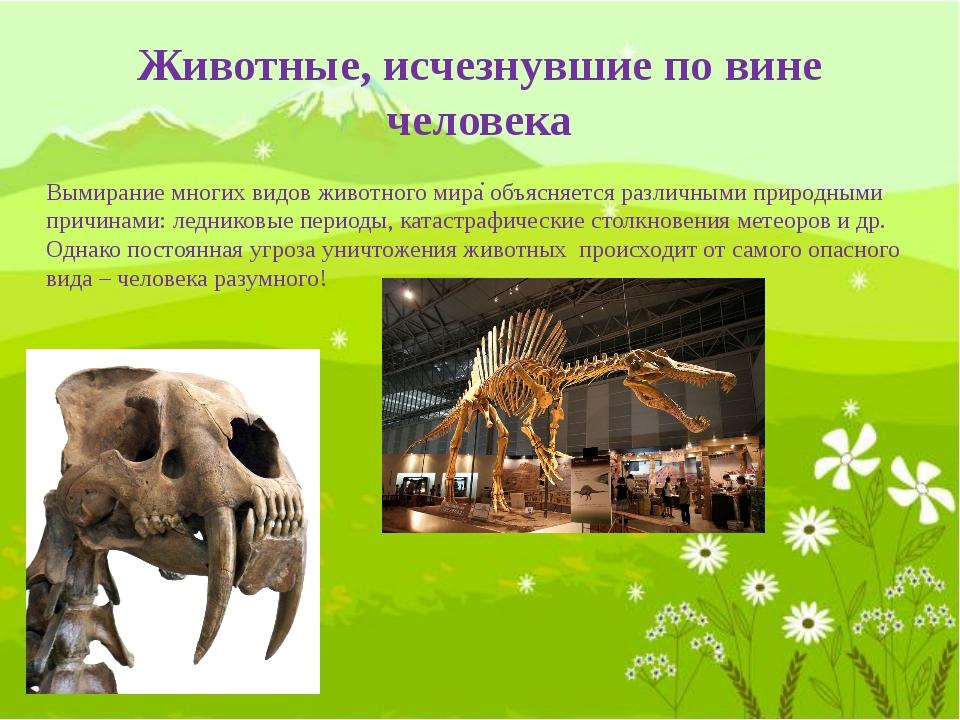Стеллерова (морская) корова названа в честь русского зоолога Стеллера, которы...