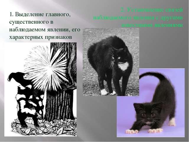 1. Выделение главного, существенного в наблюдаемом явлении, его характерных п...