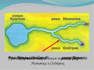Проверка. Река Незнанка впадает в … озеро Круглое. Река Осётрик впадает в… ре