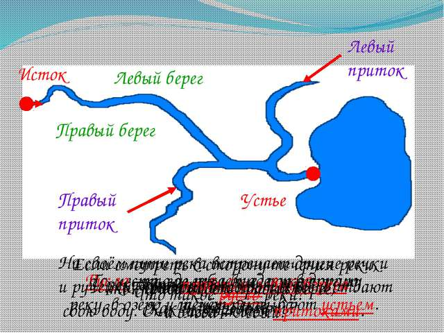 Части реки. Как называют начало реки? Исток Что такое устье реки? То место, г...
