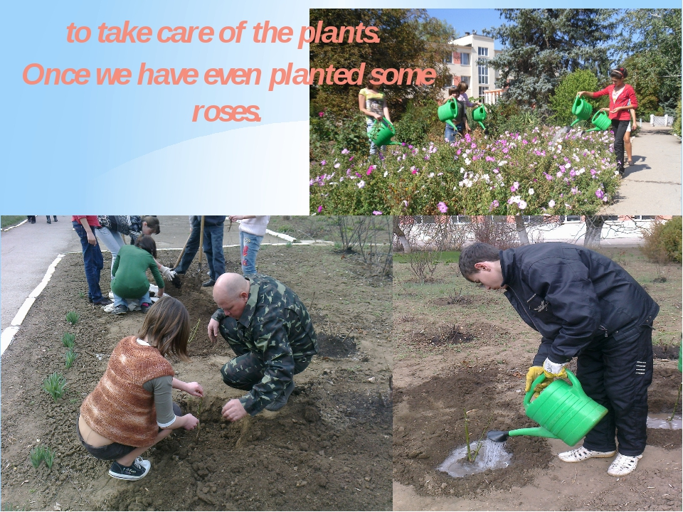 to take care of the plants. Once we have even planted some roses.