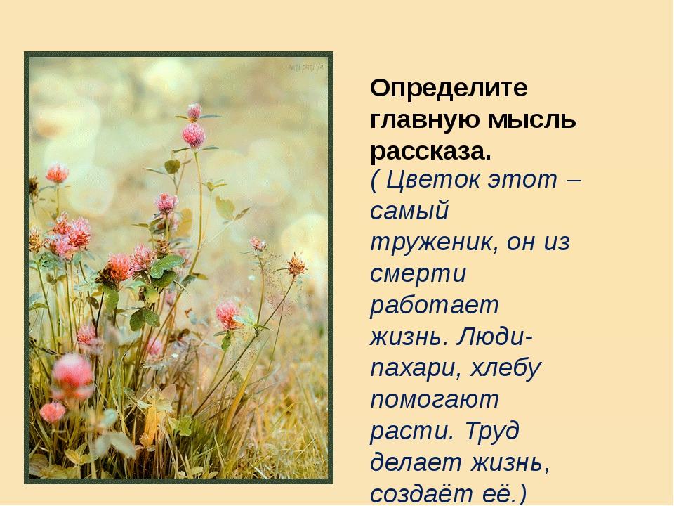 Определите главную мысль рассказа. ( Цветок этот – самый труженик, он из смер...