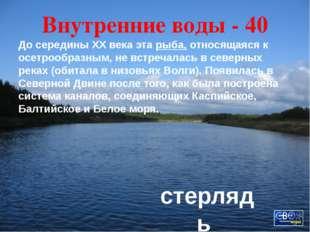 Традиции - 40 По старой традиции в канун Нового года пекут в Архангельске фиг