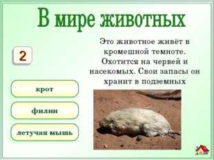 Это животное живёт в кромешной темноте. Охотится на червей и насекомых. Свои