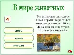 Это животное на голове несёт огромные рога, вес которых достигает 30 кг. Из-з