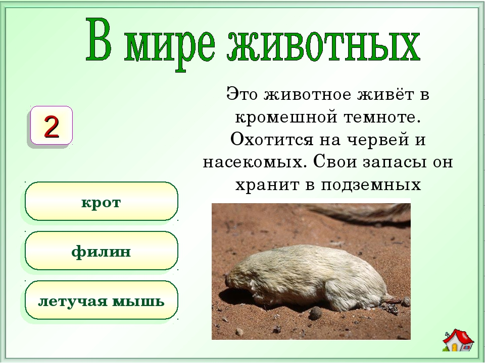 Это животное живёт в кромешной темноте. Охотится на червей и насекомых. Свои...