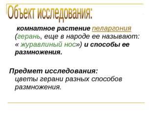 комнатное растение пеларгония (герань, еще в народе ее называют: « журавлины
