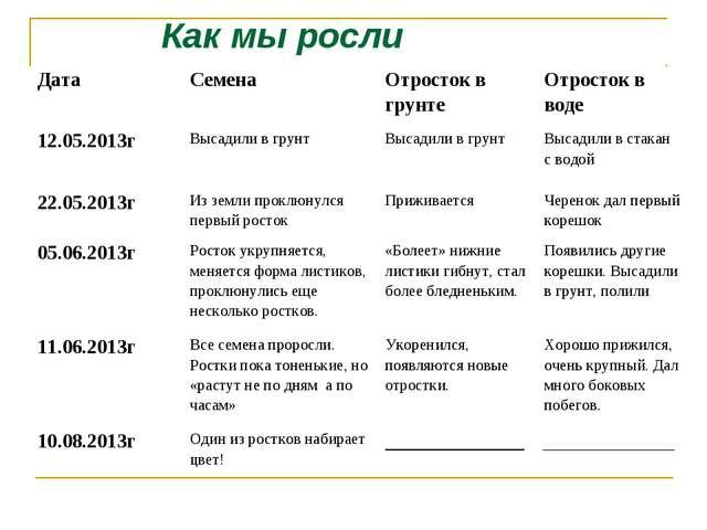 Как мы росли Дата СеменаОтросток в грунтеОтросток в воде 12.05.2013г Выса...