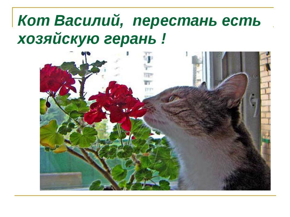 Кот Василий, перестань есть хозяйскую герань !