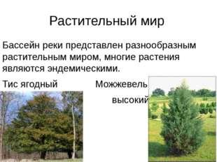 Растительный мир Бассейн реки представлен разнообразным растительным миром, м