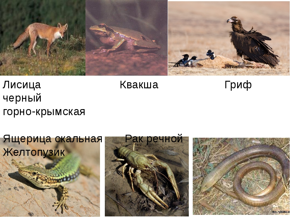 Лисица Квакша Гриф черный горно-крымская Ящерица скальная Рак речной Желтопузик