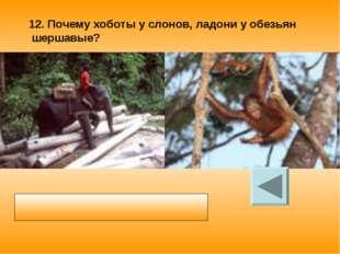 12. Почему хоботы у слонов, ладони у обезьян шершавые? Шероховатая поверхност