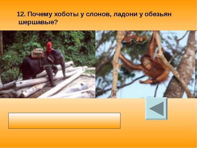 12. Почему хоботы у слонов, ладони у обезьян шершавые? Шероховатая поверхност...