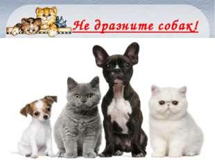 Не дразните собак! FokinaLida.75@mail.ru