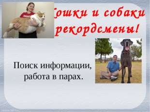 Кошки и собаки рекордсмены! Поиск информации, работа в парах. FokinaLida.75@m