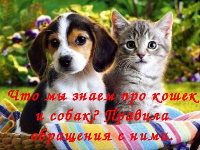 Что мы знаем про кошек и собак? Правила обращения с ними. FokinaLida.75@mail.ru