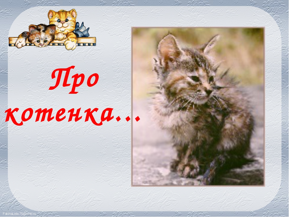 Про котенка… FokinaLida.75@mail.ru