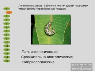 Сравнительно-анатомические Эмбриологические Примитивные млекопитающие утконос