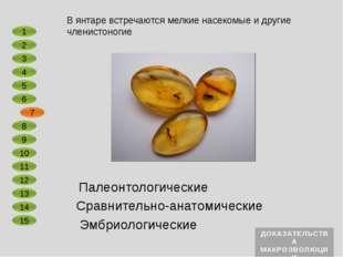 Сравнительно-анатомические Эмбриологические У всех членистоногих наружный ске