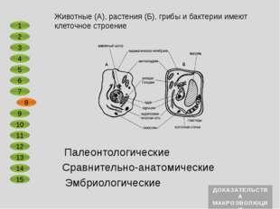 Сравнительно-анатомические Эмбриологические В ненарушенных осадочных породах