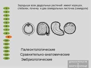 Сравнительно-анатомические Эмбриологические Первоптица археоптерикс, реконстр