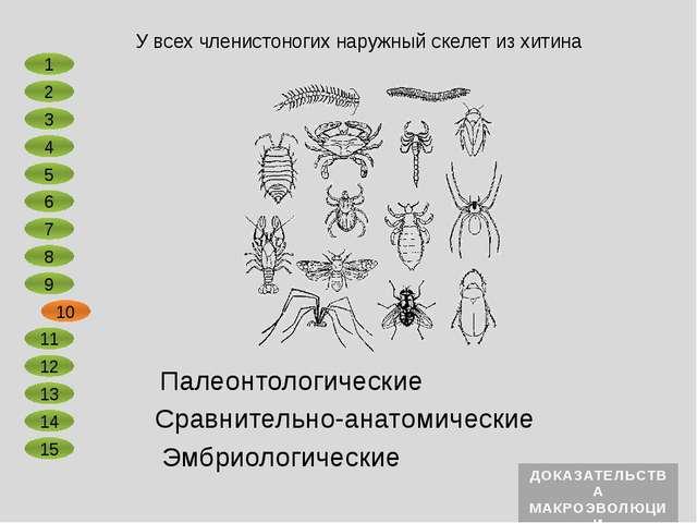 Сравнительно-анатомические Эмбриологические Головастики лягушки имеют рыбообр...
