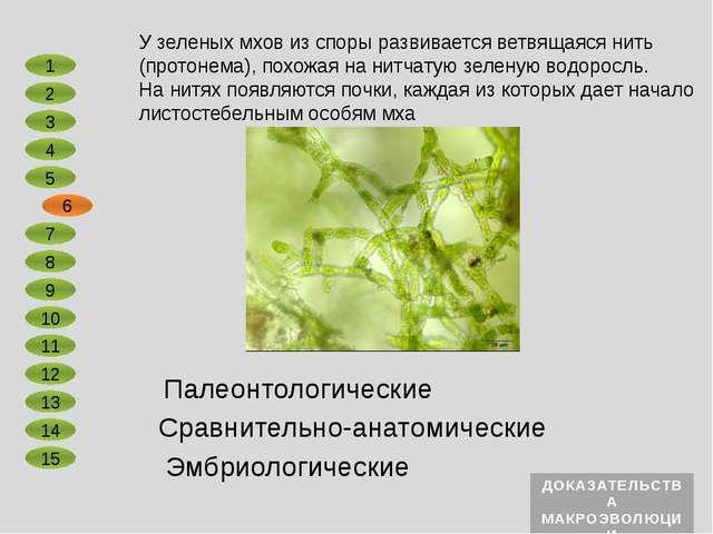 Сравнительно-анатомические Эмбриологические Зародыши всех двудольных растений...
