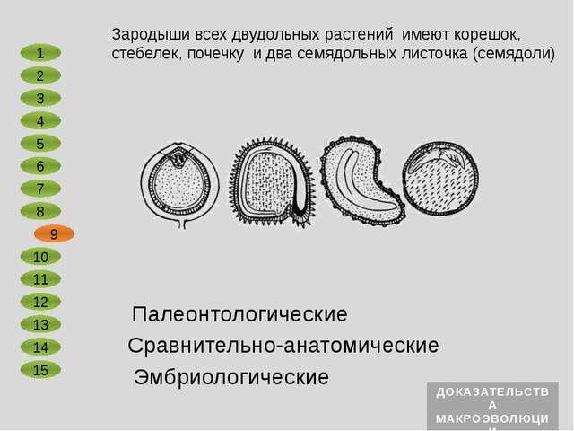 Сравнительно-анатомические Эмбриологические Первоптица археоптерикс, реконстр...