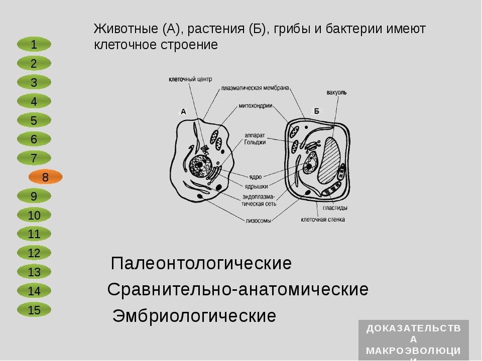 Сравнительно-анатомические Эмбриологические В ненарушенных осадочных породах...