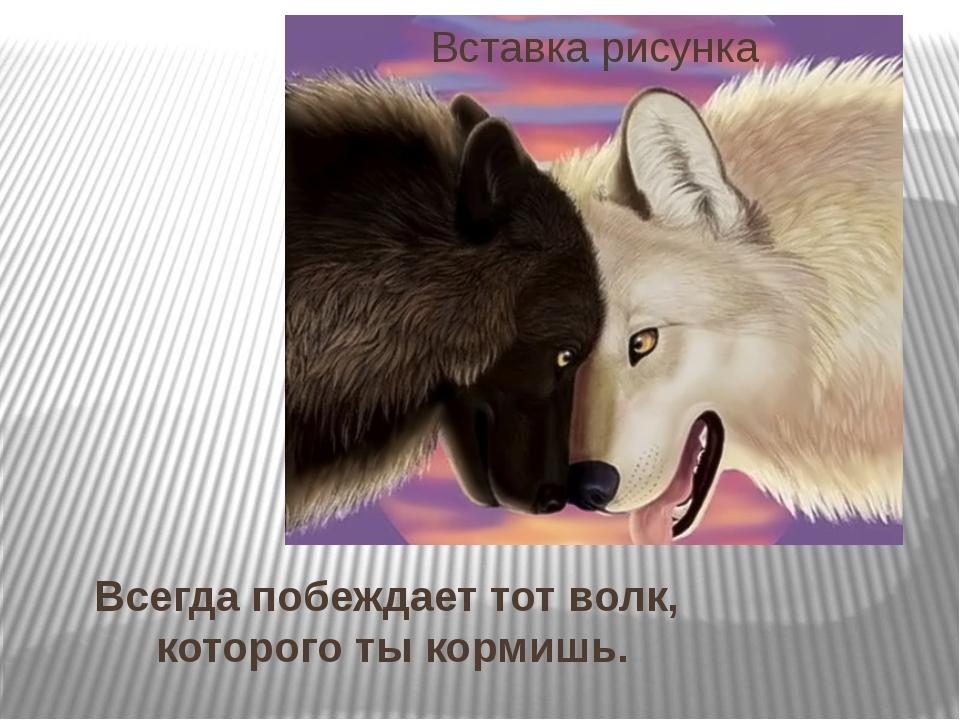 Всегда побеждает тот волк, которого ты кормишь.