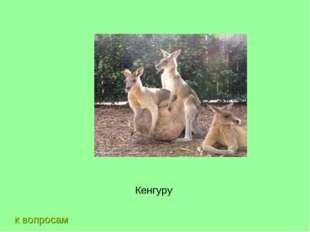к вопросам Кенгуру