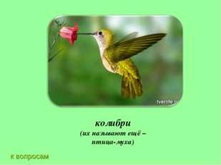 к вопросам колибри (их называют ещё – птица-муха)