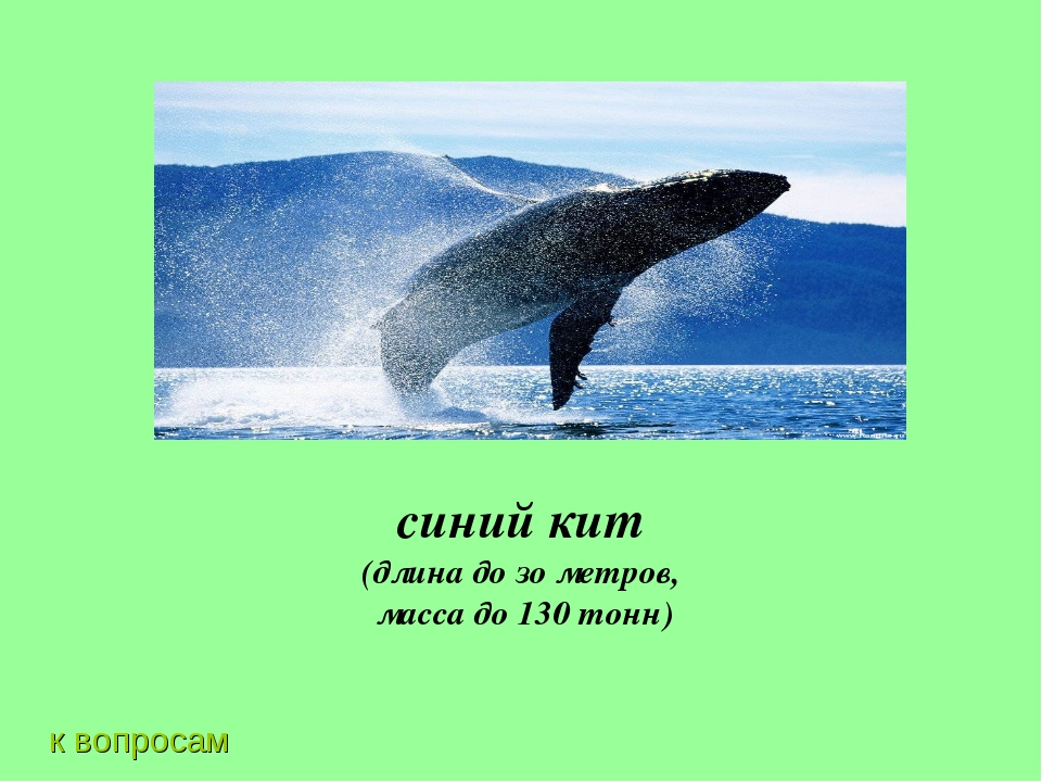 к вопросам синий кит (длина до зо метров, масса до 130 тонн)