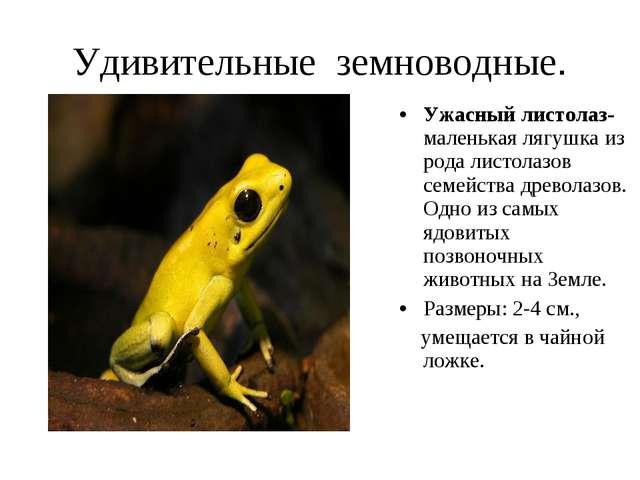 Удивительные земноводные. Ужасный листолаз- маленькая лягушка из рода листола...