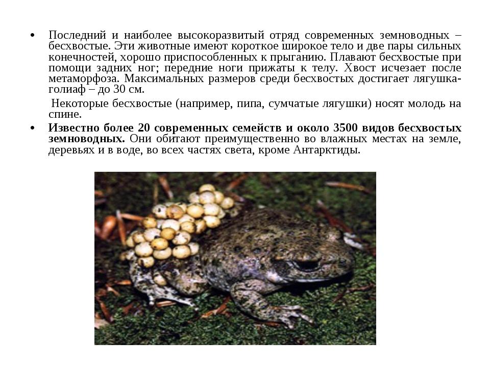 Последний и наиболее высокоразвитый отряд современных земноводных – бесхвосты...